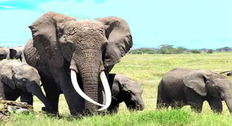 Elephants at Gashaka-Gumti National Park, Taraba State