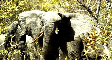 Elephant in Yankari Game Reserve