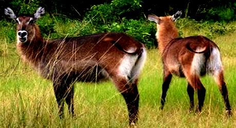 Photo of Yankari Game Reserve